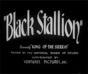 Black Stallion (1939)